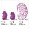 Tumor suppressor function of the Flcn/Fnip1/Fnip2 protein complex