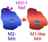 M2 to M1-macrophages differentiation by HIV-1 Nef