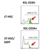 Hematopoietic stem cell enhancer