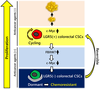 Colorectal cancer stem cells acquire chemoresistance through the upregulation of FBXW7 and the consequent degradation of c-Myc