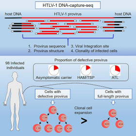 The nature of the HTLV-1 provirus in naturally infected individuals analyzed by the viral DNA-capture-seq approach