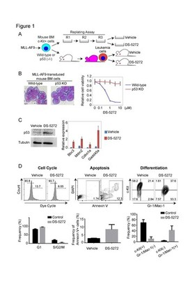 Antitumor immunity augments the therapeutic effects of p53 activation on acute myeloid leukemia