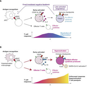 T-Cell Hyperactivation and Paralysis in Severe COVID-19 Infection Revealed by Single-Cell Analysis