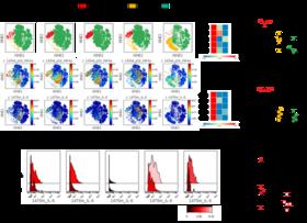 Inflammation-driven senescence-associated secretory phenotype in cancer-associated fibroblasts enhances peritoneal dissemination