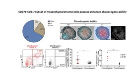 CD271+CD51+PALLADIN- human mesenchymal stromal cells possess enhanced ossicle-forming potential