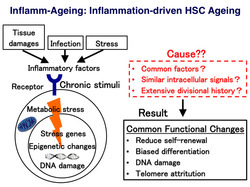 Inflamm-ageing.jpg