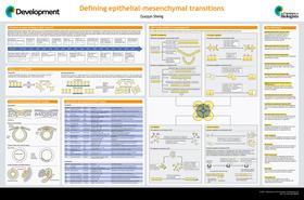 Defining epithelial-mesenchymal transitions in animal development