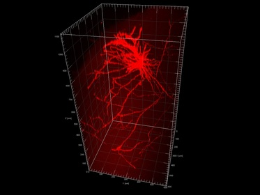 Multi-dimensional Imaging
